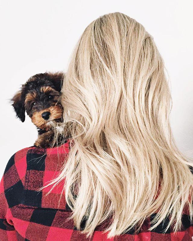 Back home with baby Taco 😍 #lacasademurphy #TacoMurphy . . . . . #theeverygirl #thatsdarling #darlingweekend #bedeeplyrooted #livethelittlethings #darlingmovement #thepursuitofjoyproject #morningslikethese #dogsofinstagram #puppiesofinstagram #puppylove #everydaymadewell