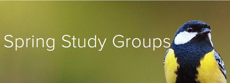 spring study groups.JPG