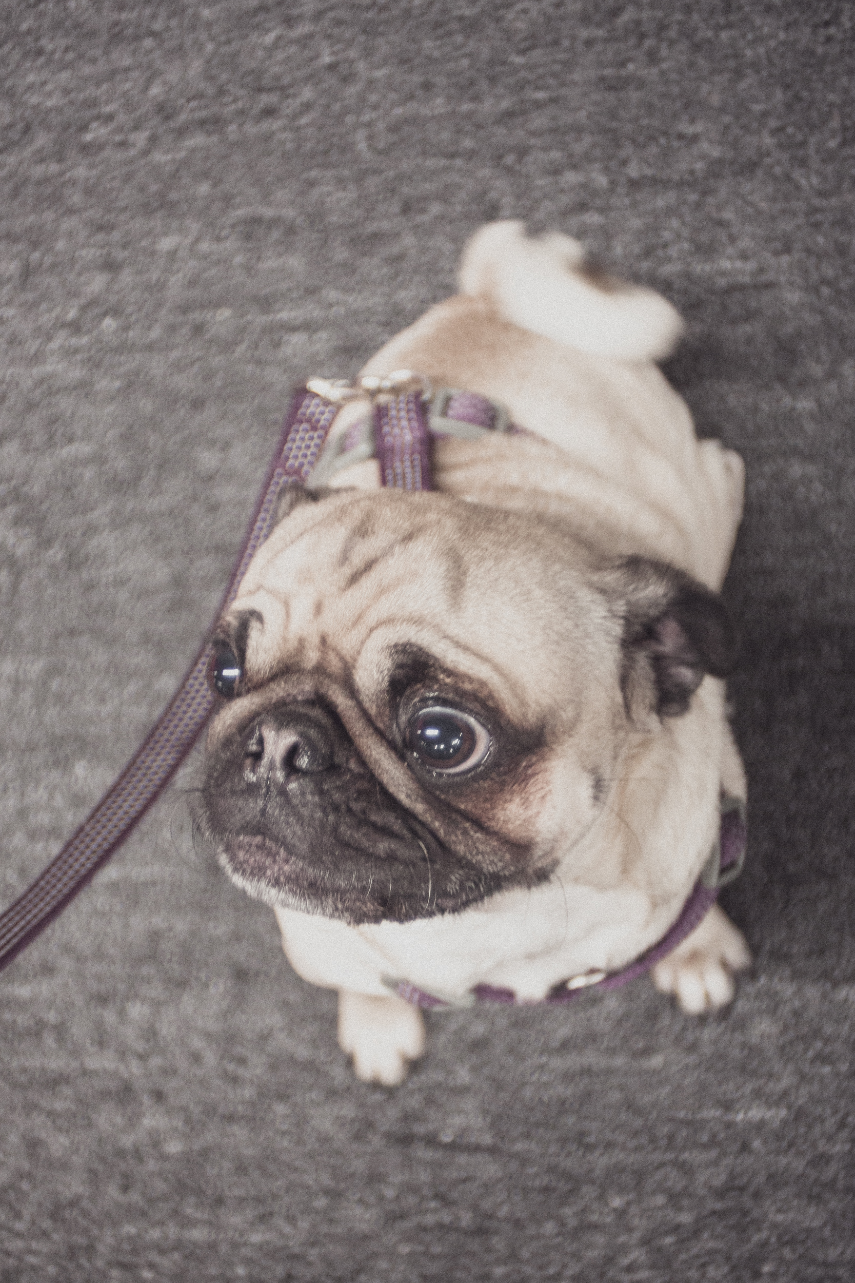 I love Rufus