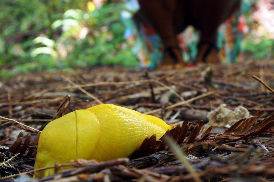 A close up of a banana slug