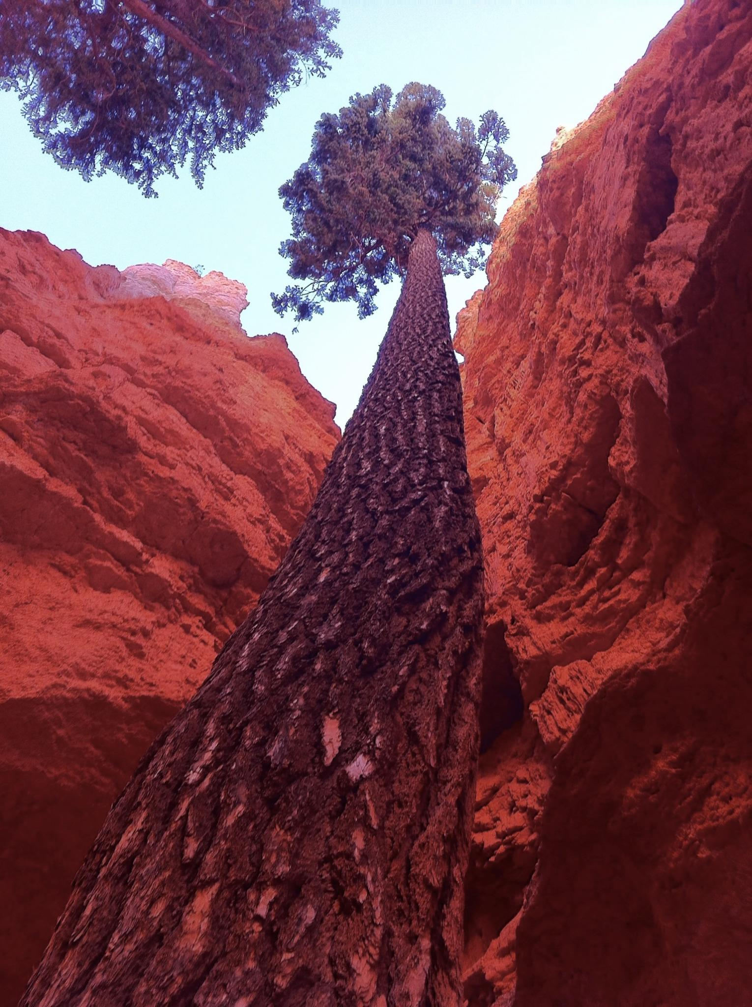A single tree rooted at the base of the canyon