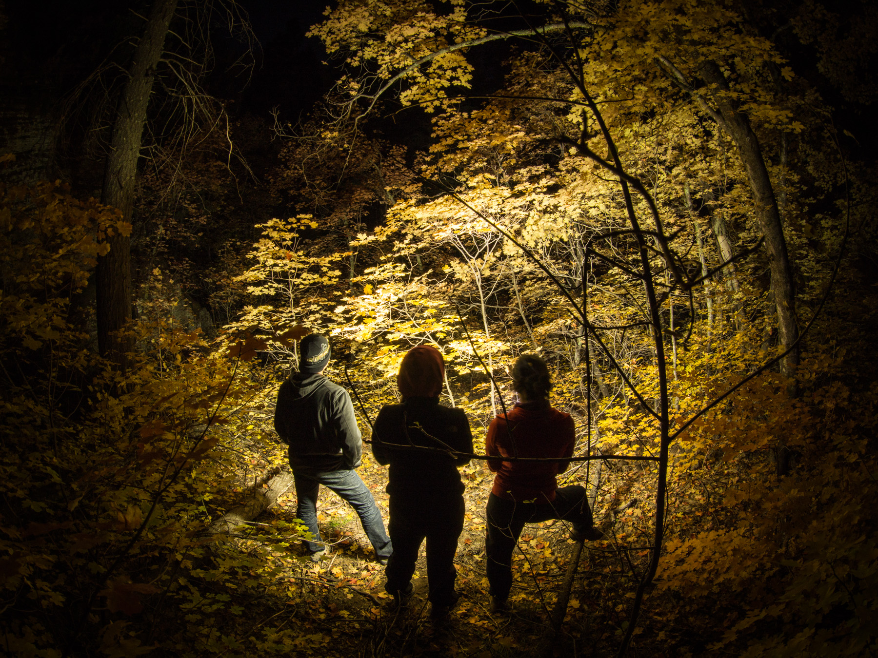 An amazing shot of us looking into the trees with our headlamps