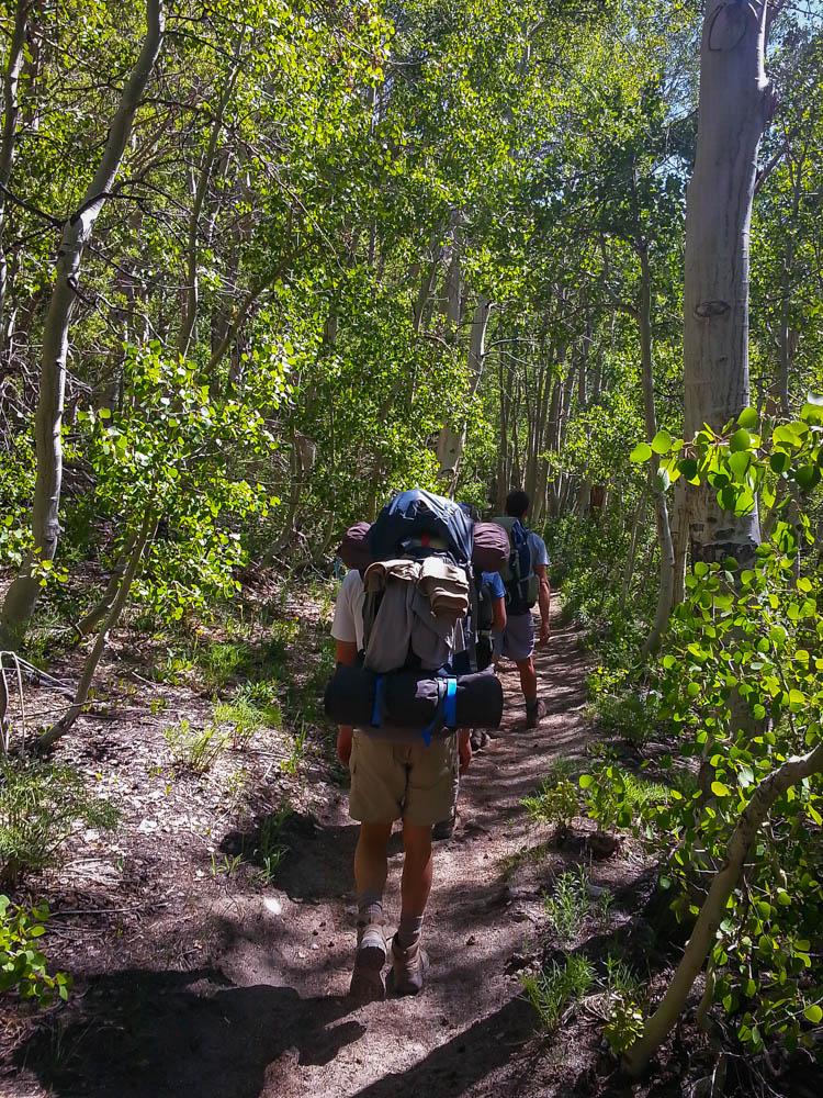 Hiking through a beautiful tree grove
