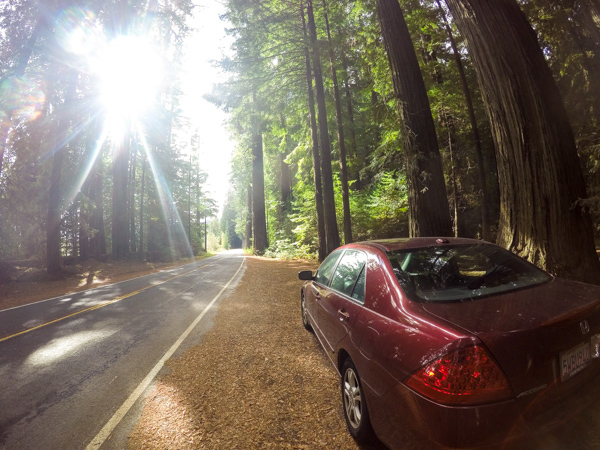 Parking in the turn off from the Avenue of Giants