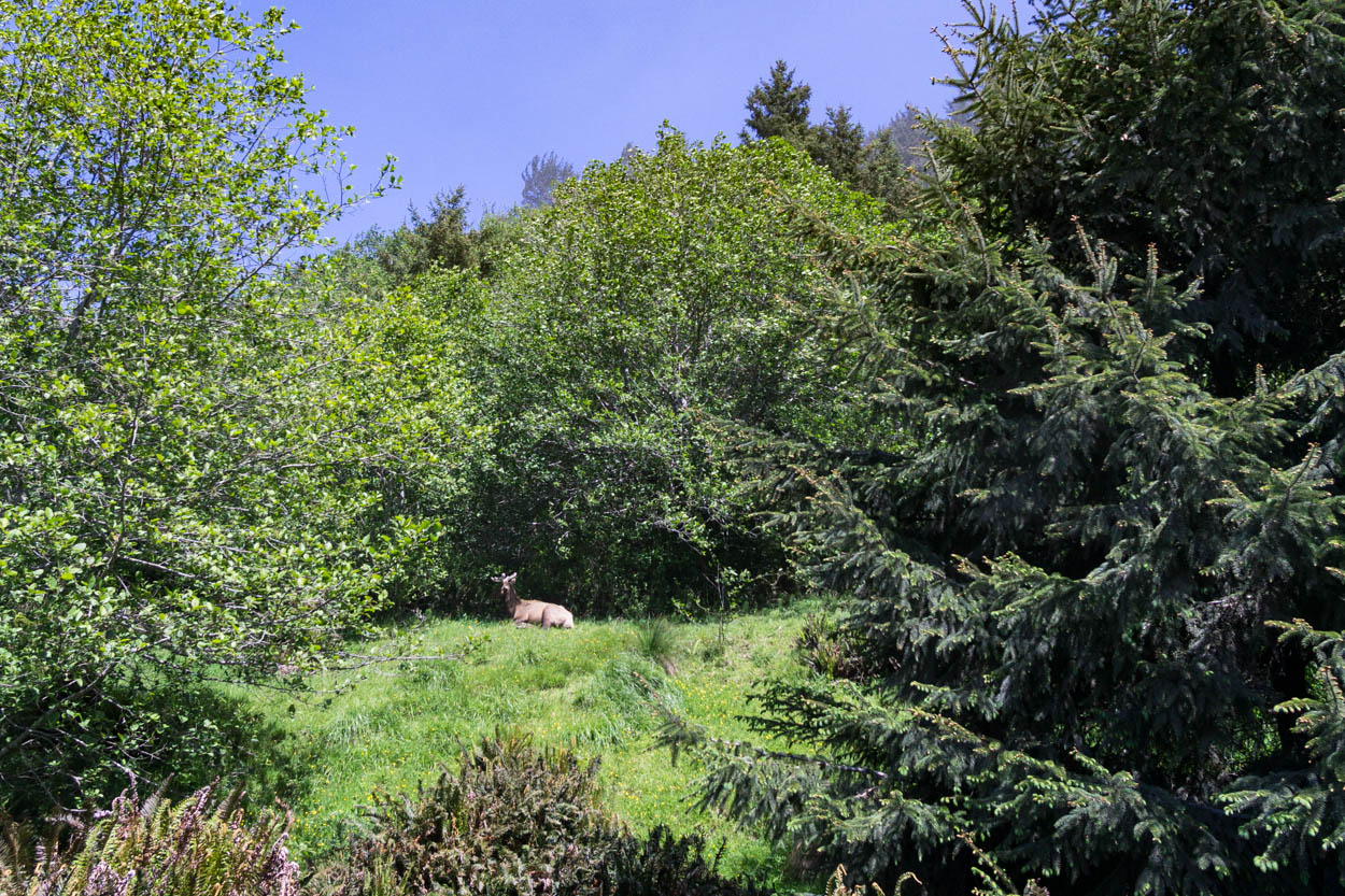 A buck casually chilling on the hillside right at the start of the trail