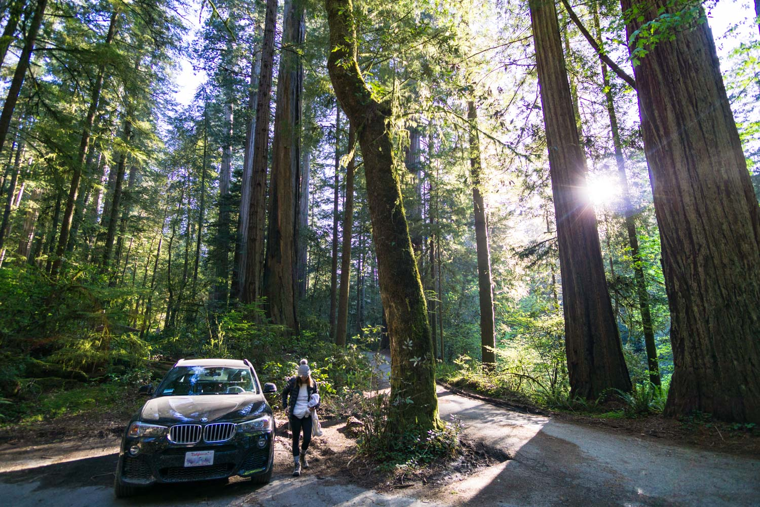 The parking lot at the top of the redwood grove