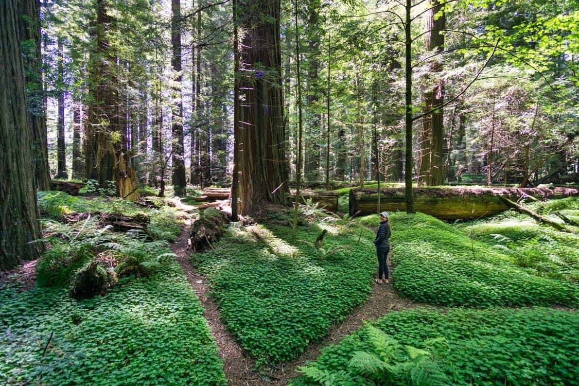 redwoods-road-trip-avenue-of-giants.jpg
