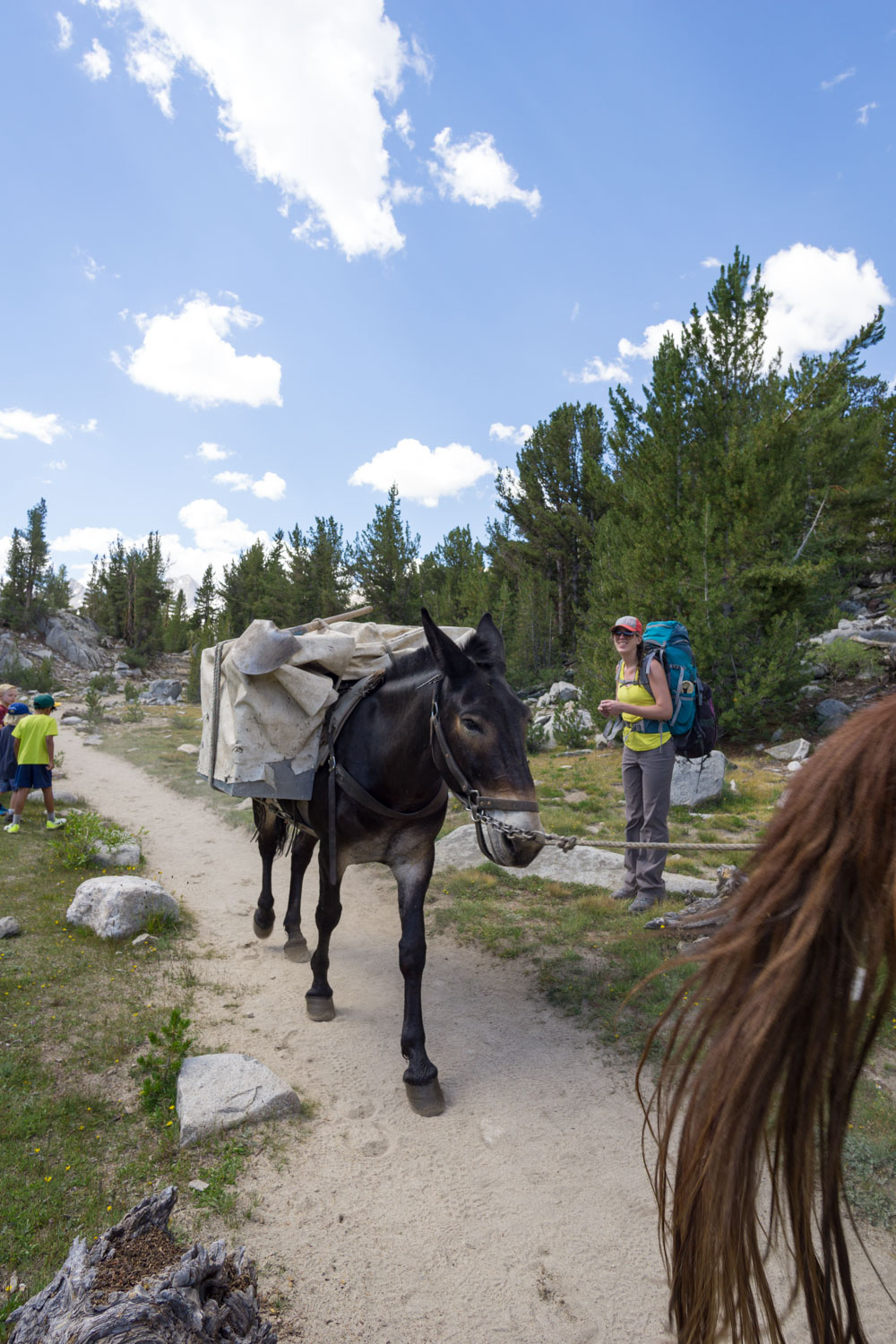 Pack mules on the earlier portions of the trail