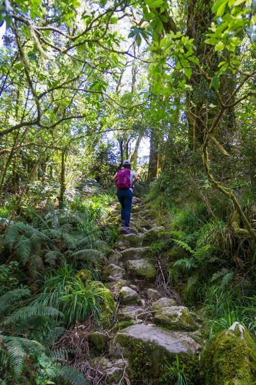favorite dayhikes on south island new zealand