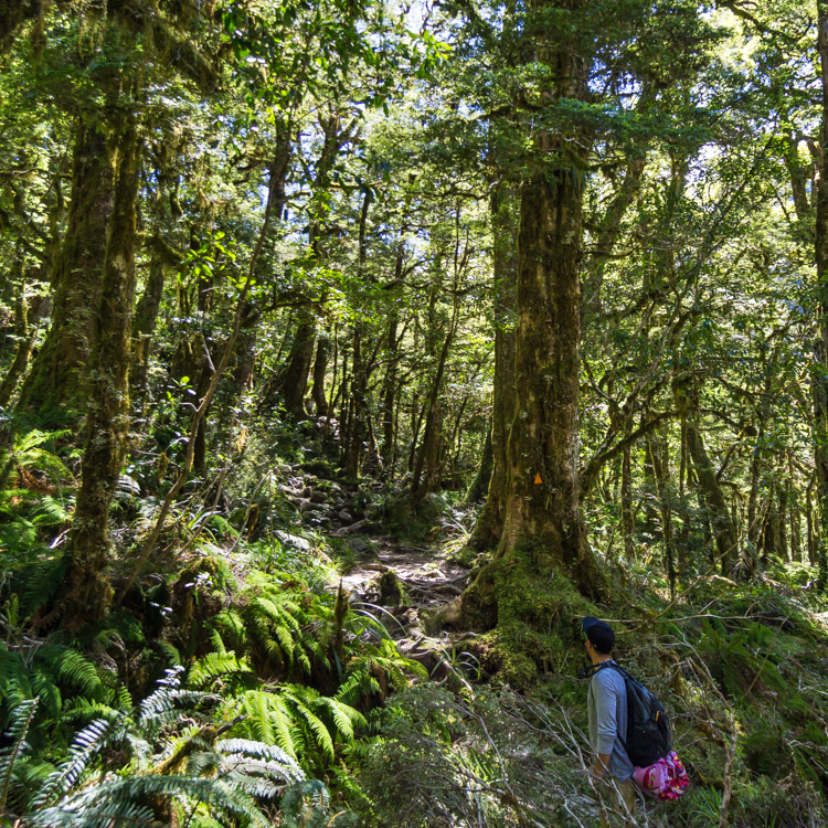 Forest hikes in fiordland national park