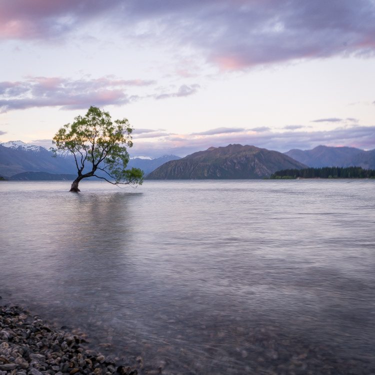 That famous wanaka tree, a must photograph