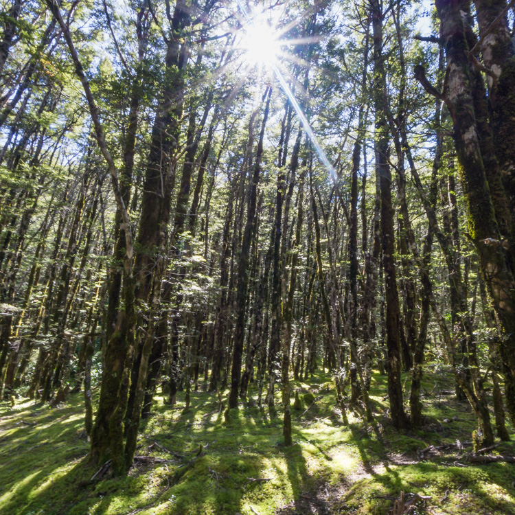Lush forest along the Devil's Punchbowl Falls Track