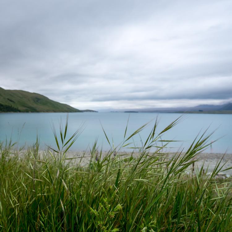 Stopping in Lake Tekapo during our New Zealand roadtrip
