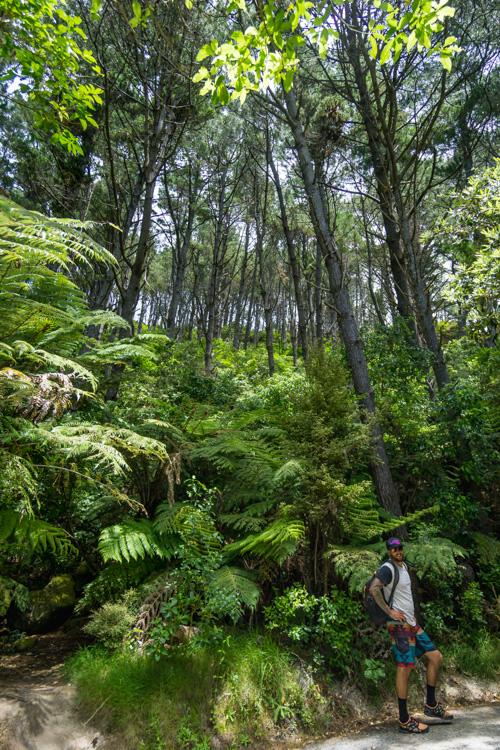 short day hikes near auckland