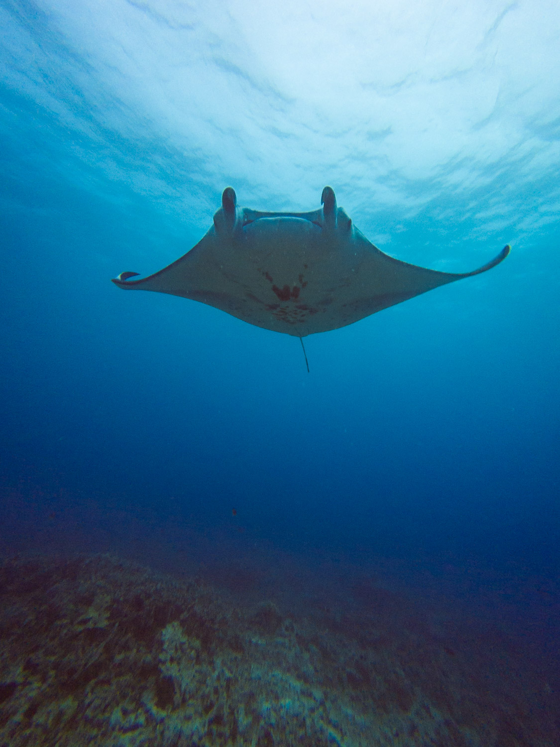 Encountering a manta on the first dive