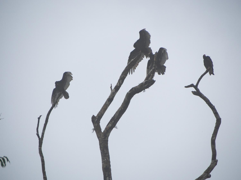 Wildlife jungle trek with Osa Wild