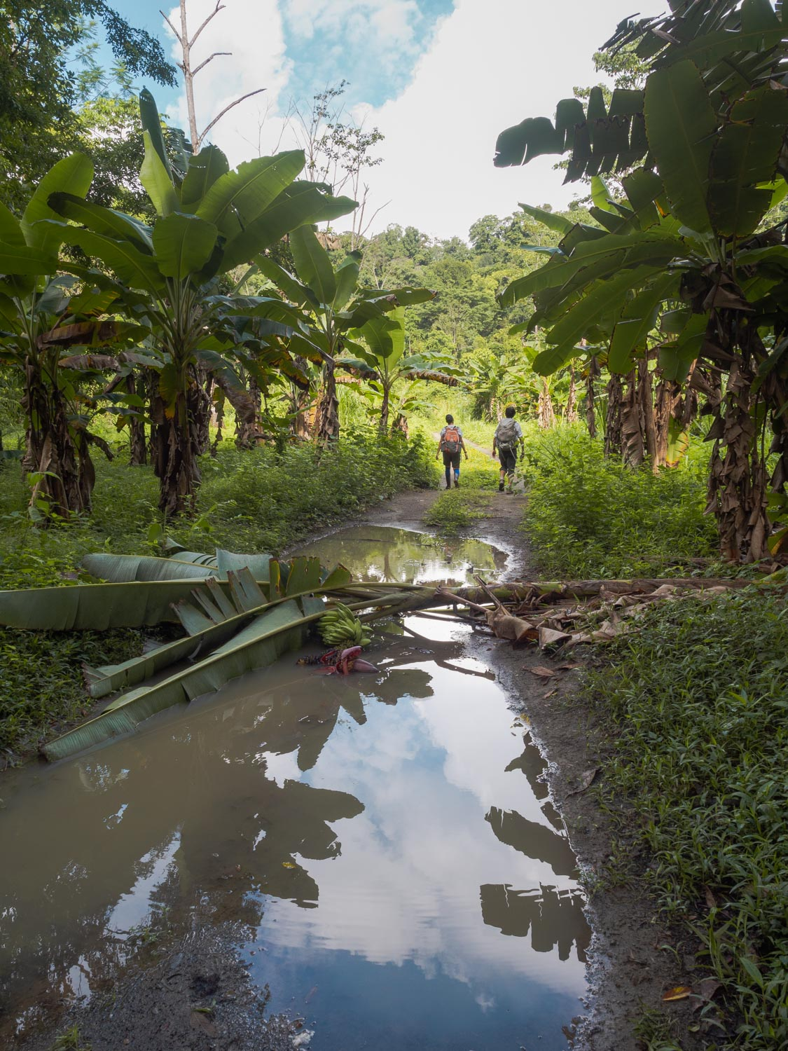 guided intense jungle trek with osa wild