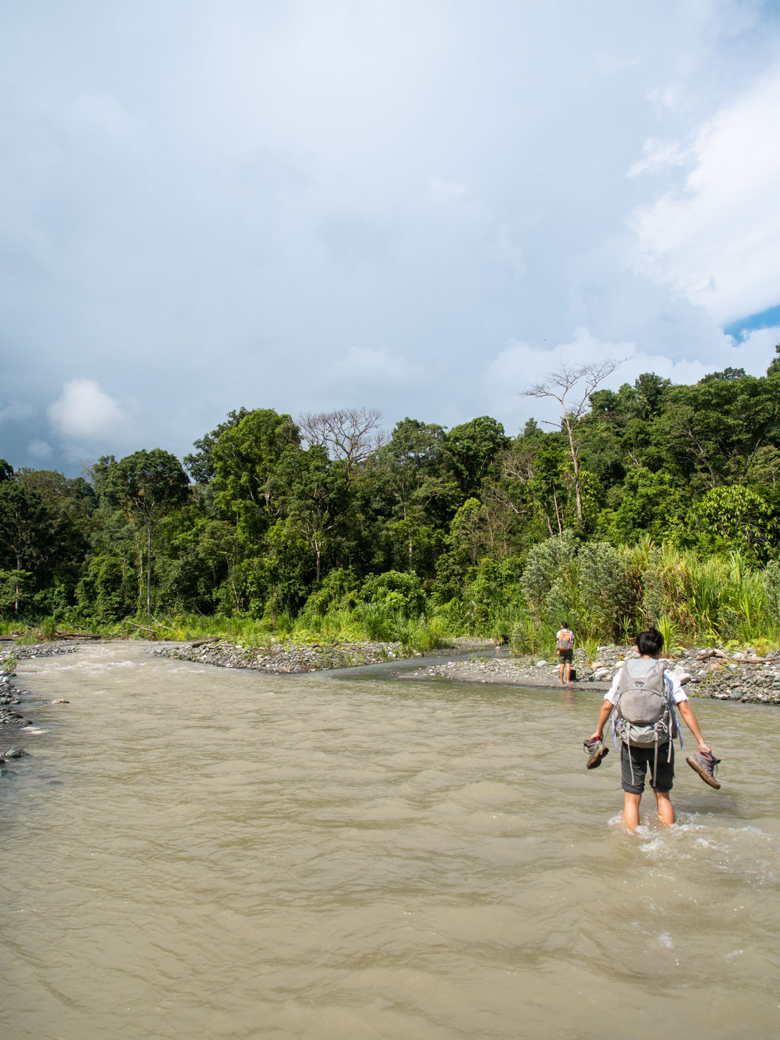 best way to see corcovado jungle