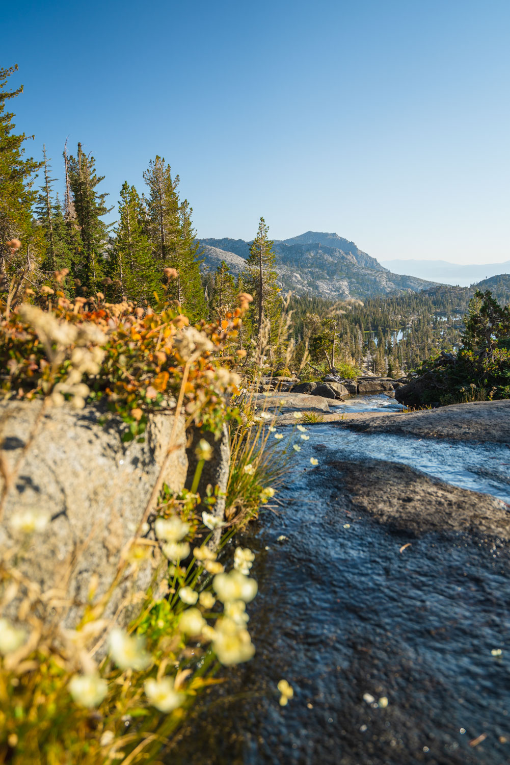 Wildflowers by Fontanillis Lake outlet