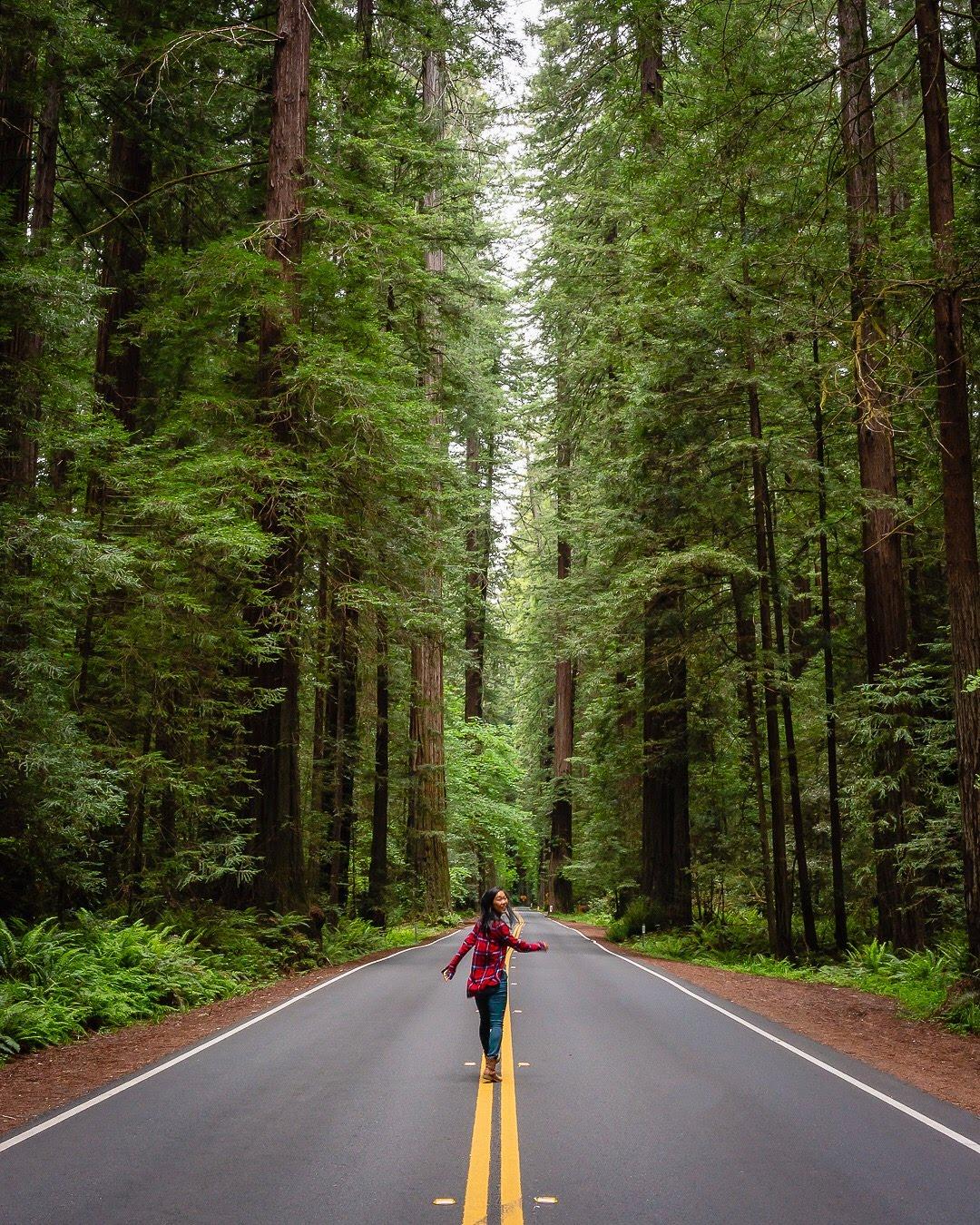 Avenue of Giants road