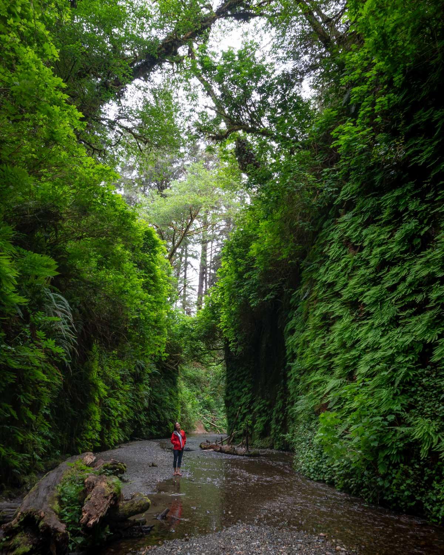 Fern Canyon hike