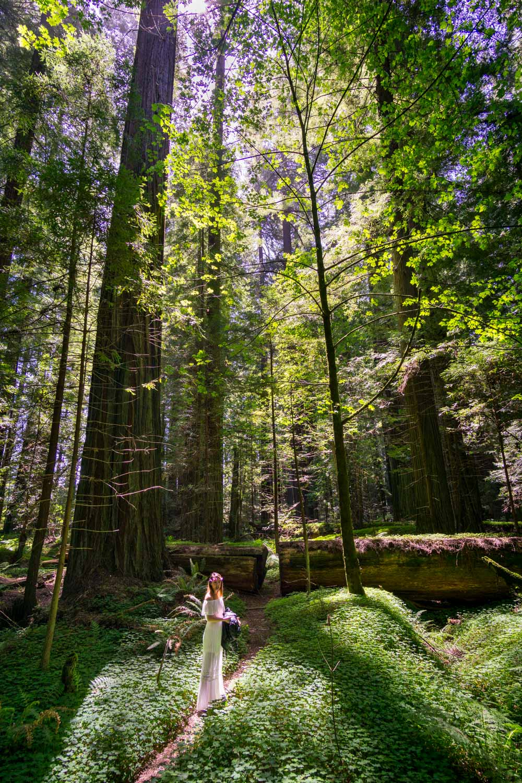 A grove in Humboldt Redwoods