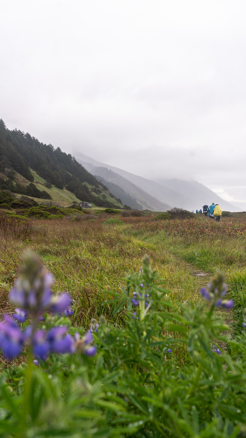 Backpacking the Lost Coast Trail in spring for wildflowers