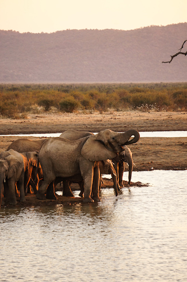 Elephants South Africa Safari