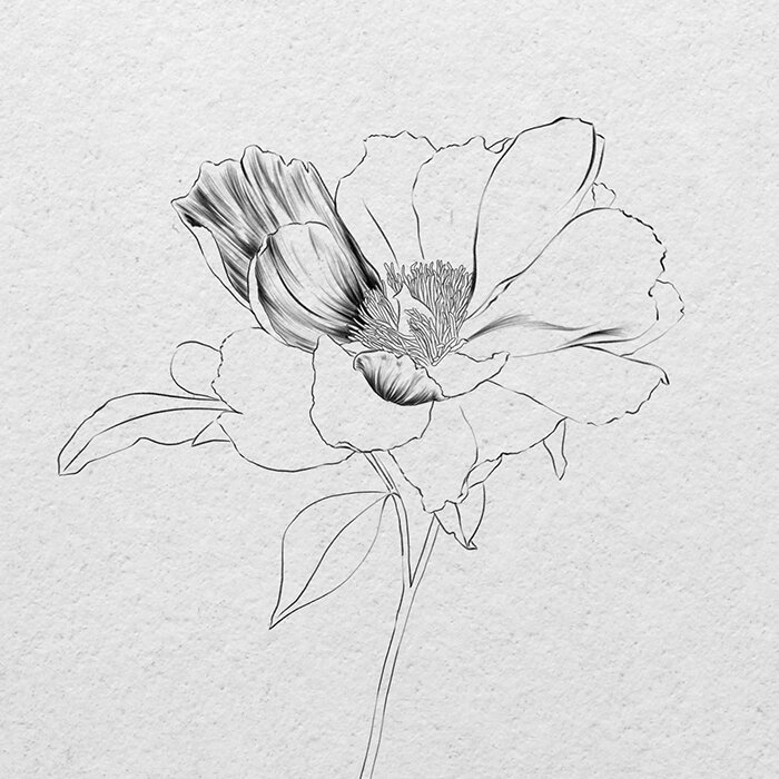 How To Draw A Realistic Flower Sketch Pencil Or Ipad Vanessa Vanderhaven This page will give you general info that you can use like any other skill, the more you work at it the easier it will become in the better your results will be. how to draw a realistic flower sketch