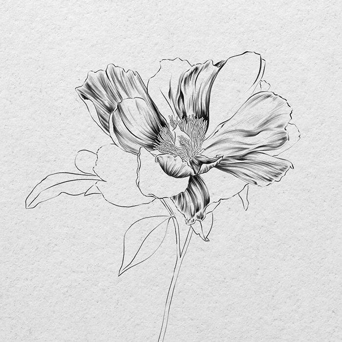 How To Draw A Realistic Flower Sketch Pencil Or Ipad Vanessa Vanderhaven
