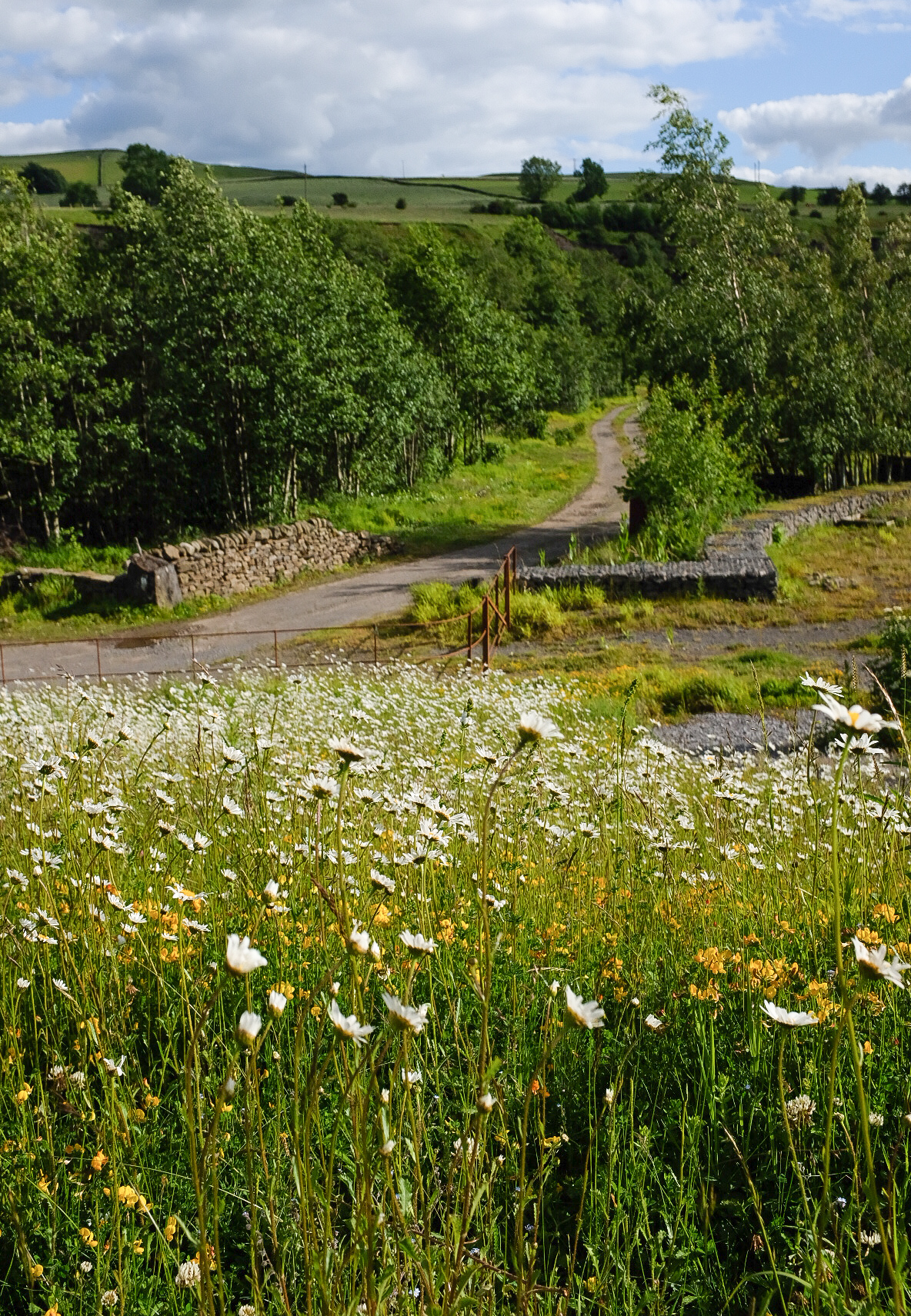 A carpet of wildflowers.