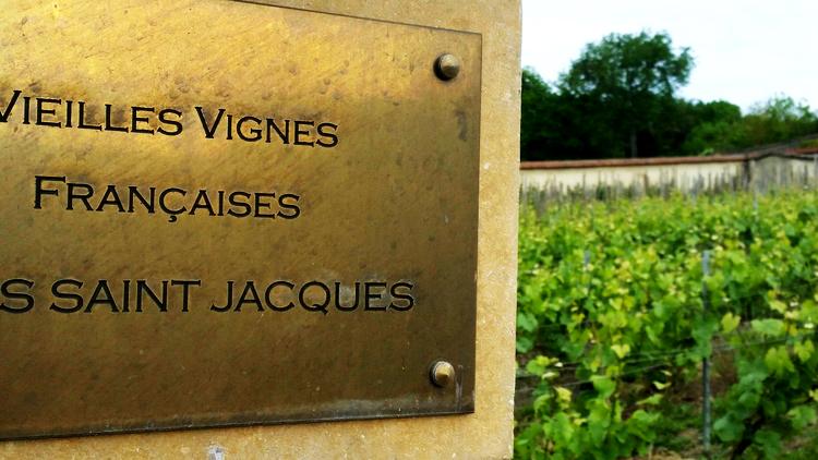 The legendary vineyard Clos Saint Jacques