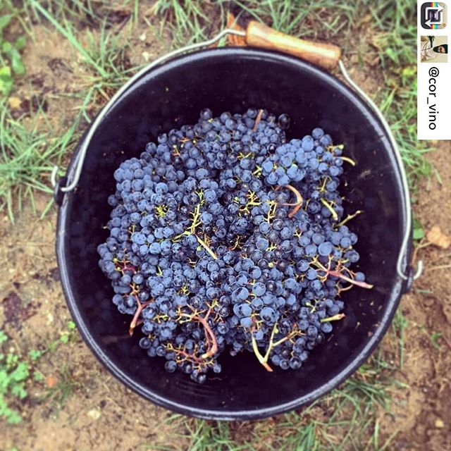 Monday motivation and inspiration from the vineyards... 🍇🍇🍇🍇🍇🍇🍇🍇🍇 #repost @cor_vino pic by @nicolas.audebert #wine #winelover #harvest #redwine #vino #vinorosso #vendange  #yachtwine #winepics #vineyard  #winelovers #wineforyachts