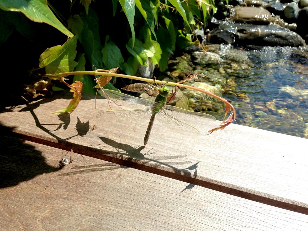 Detailaufnahme mit Libelle