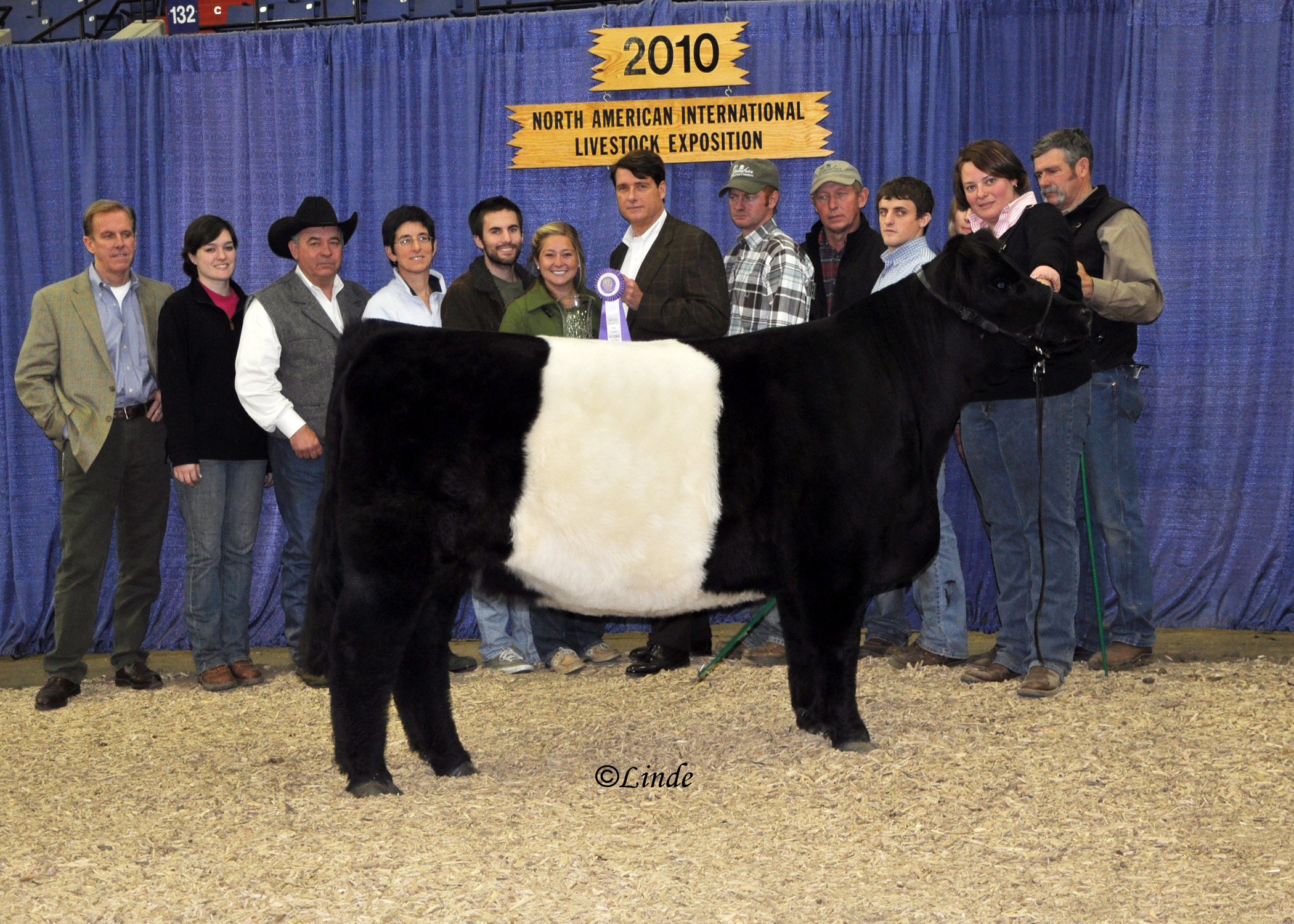 MEADOWOOD Ursa -  2010 NAtional Champion Female     SIRE: Southdown Revenue 13R            DAM: Enniscorthy Katrina 151K