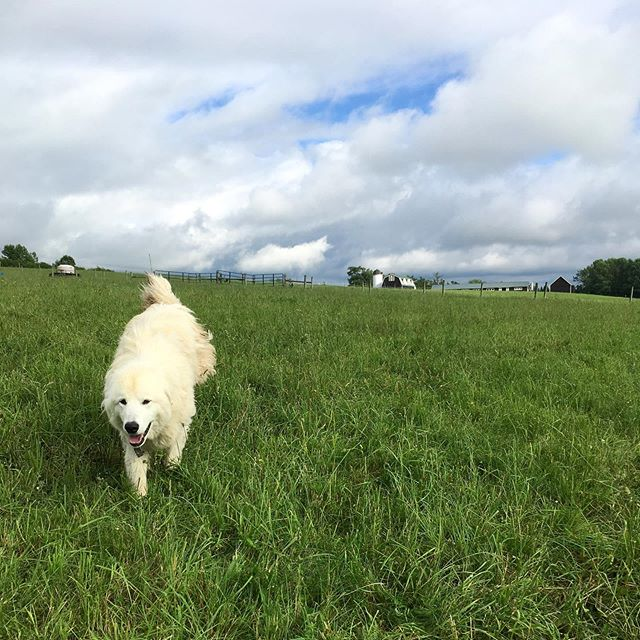 Our Flock — Meadowood Farms