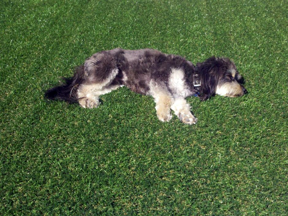 Artificial_Grass_Dogs.jpg