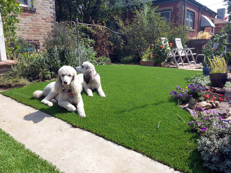 Fake_Grass_For_Pets.jpg