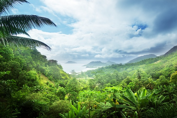 Despite the illusion of Fiji bottled water, the tropical destination is actuallyin need of clean water and reforestation.