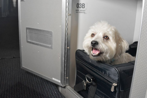 Disclaimer: This is not a photo of me Photo Credit: American Airlines