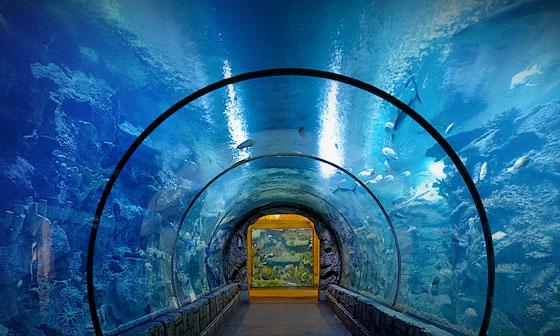 Mandalay Bay Shark Reef.jpg