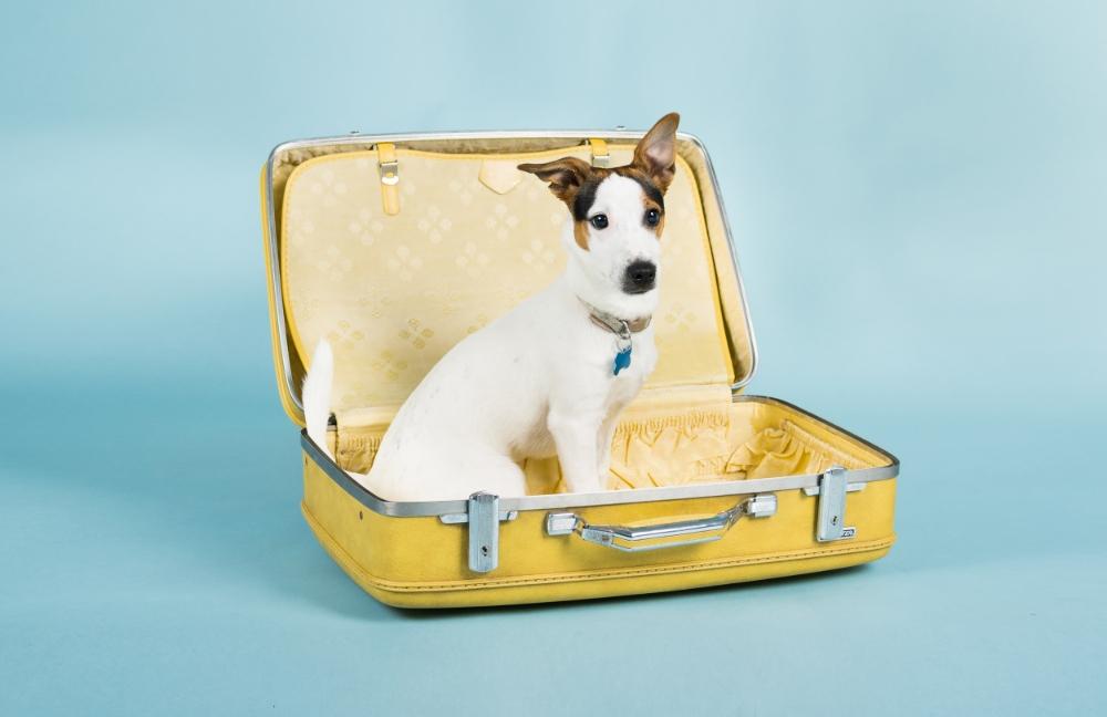 bring-pet-private-jet