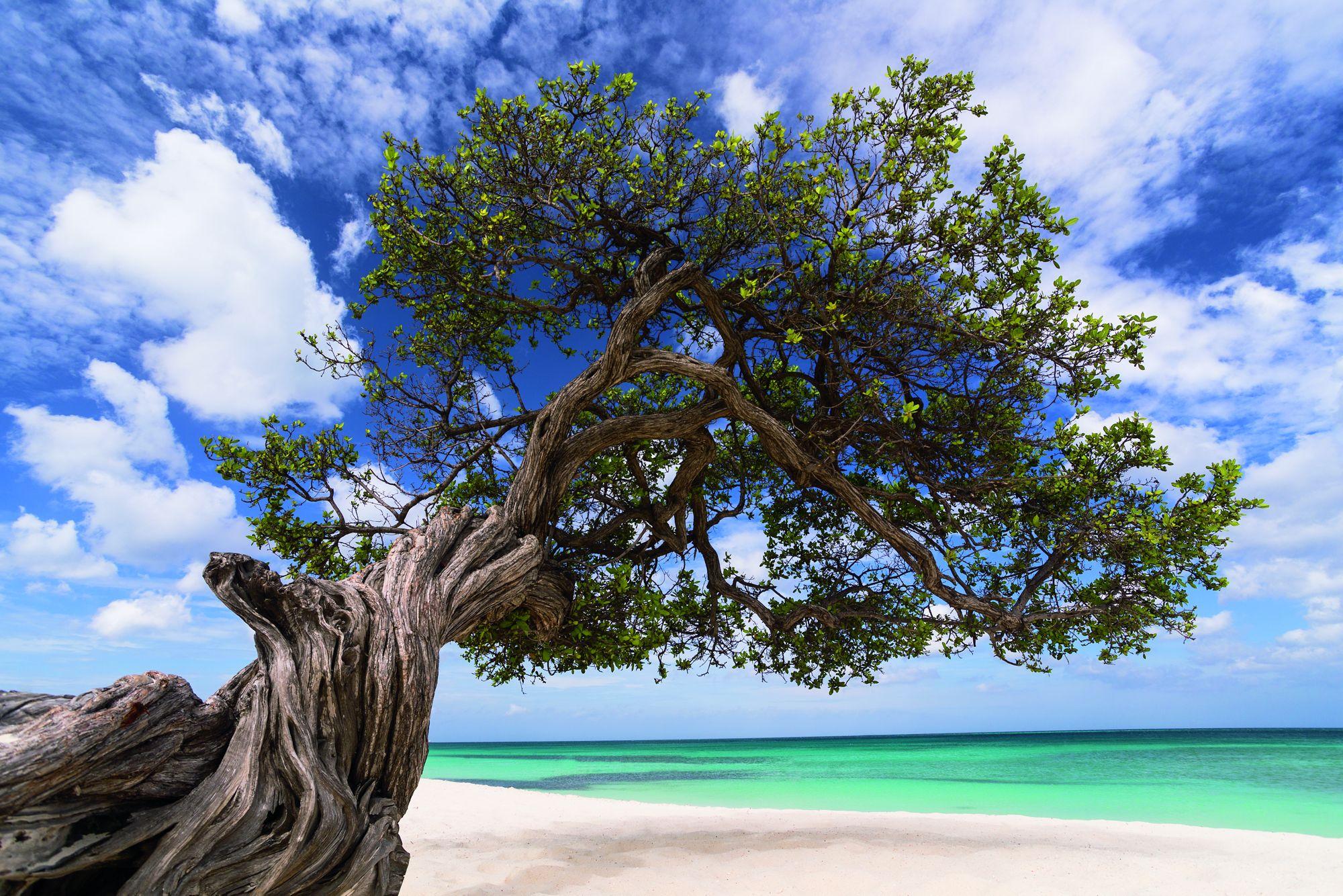 Ritz-Carlton Aruba_05.jpeg