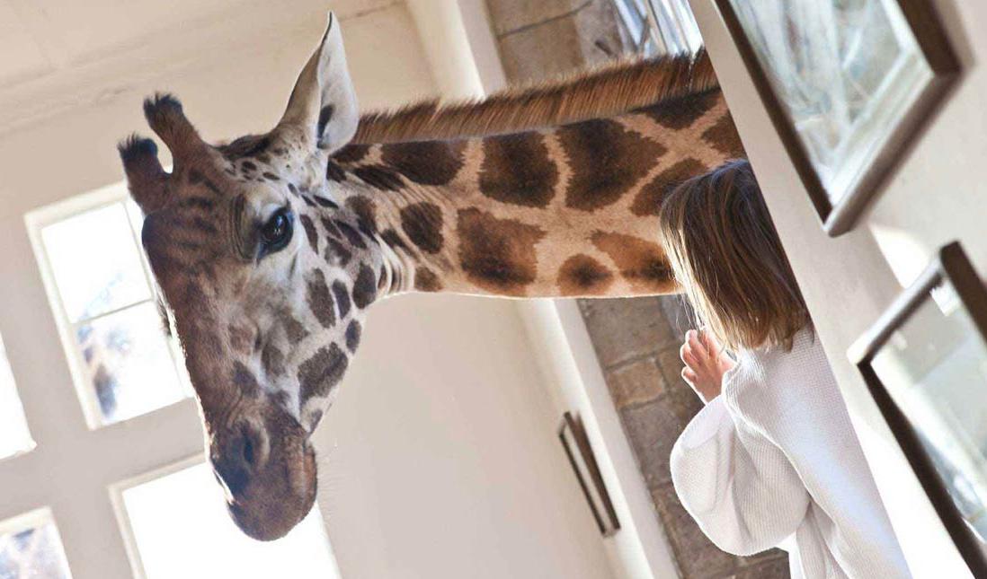 Giraffe Manor_05.png