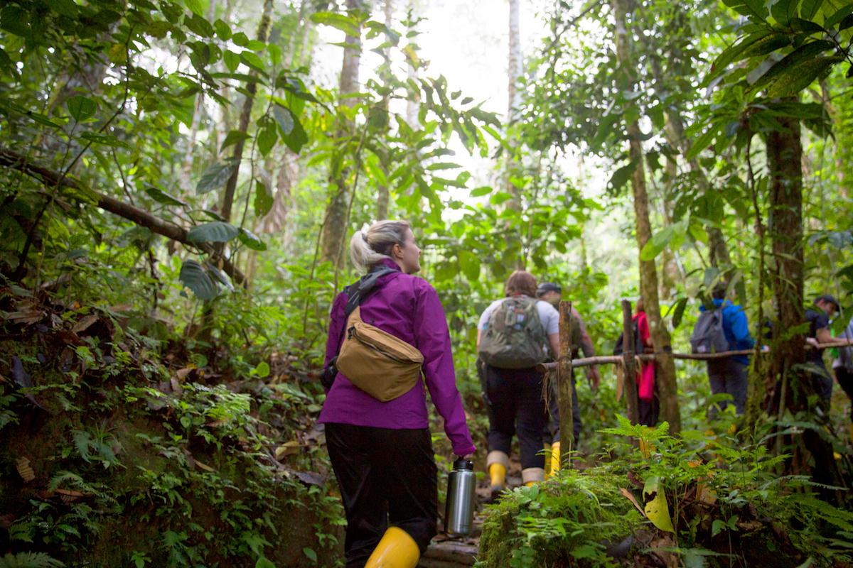 Amazon_ecuador_rainforest.jpg
