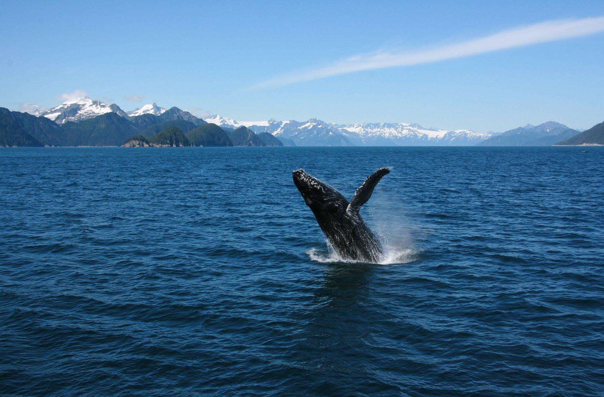 Alaska_whale_watching.jpg