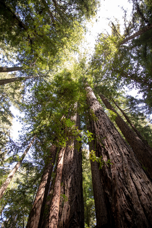 trees-canyon-ranch-wellness-retreat-woodside-ca.jpg