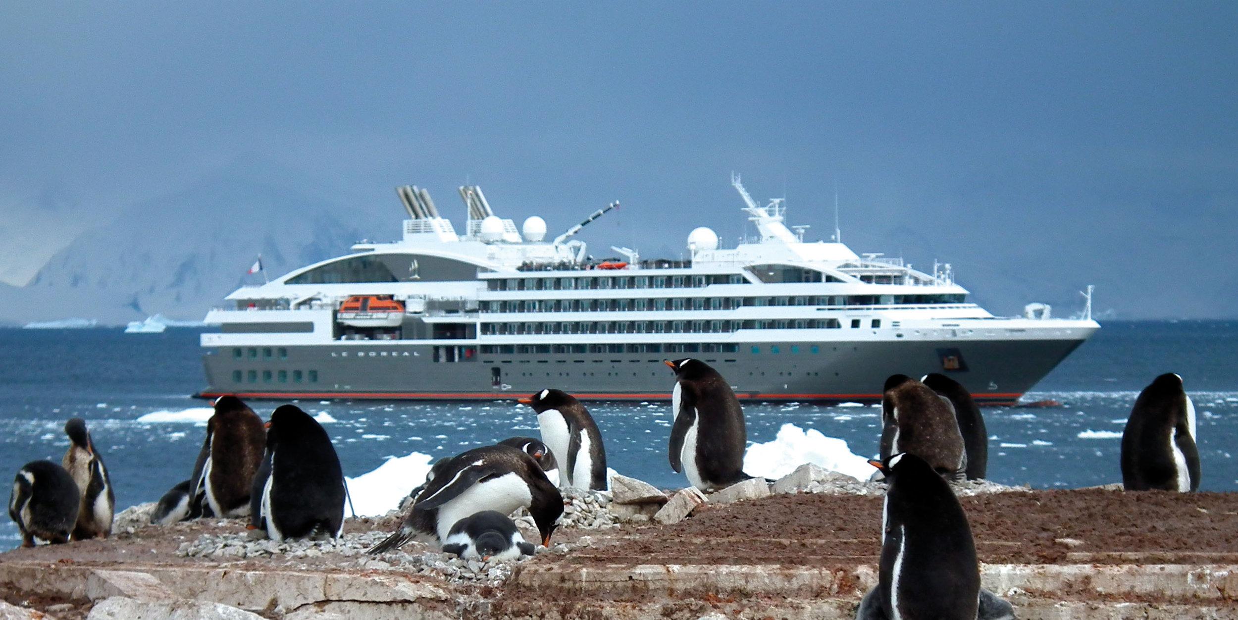 LeBoreal_penguins_004.jpg