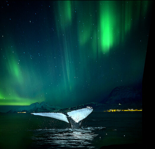 whale watching northern lights.jpg