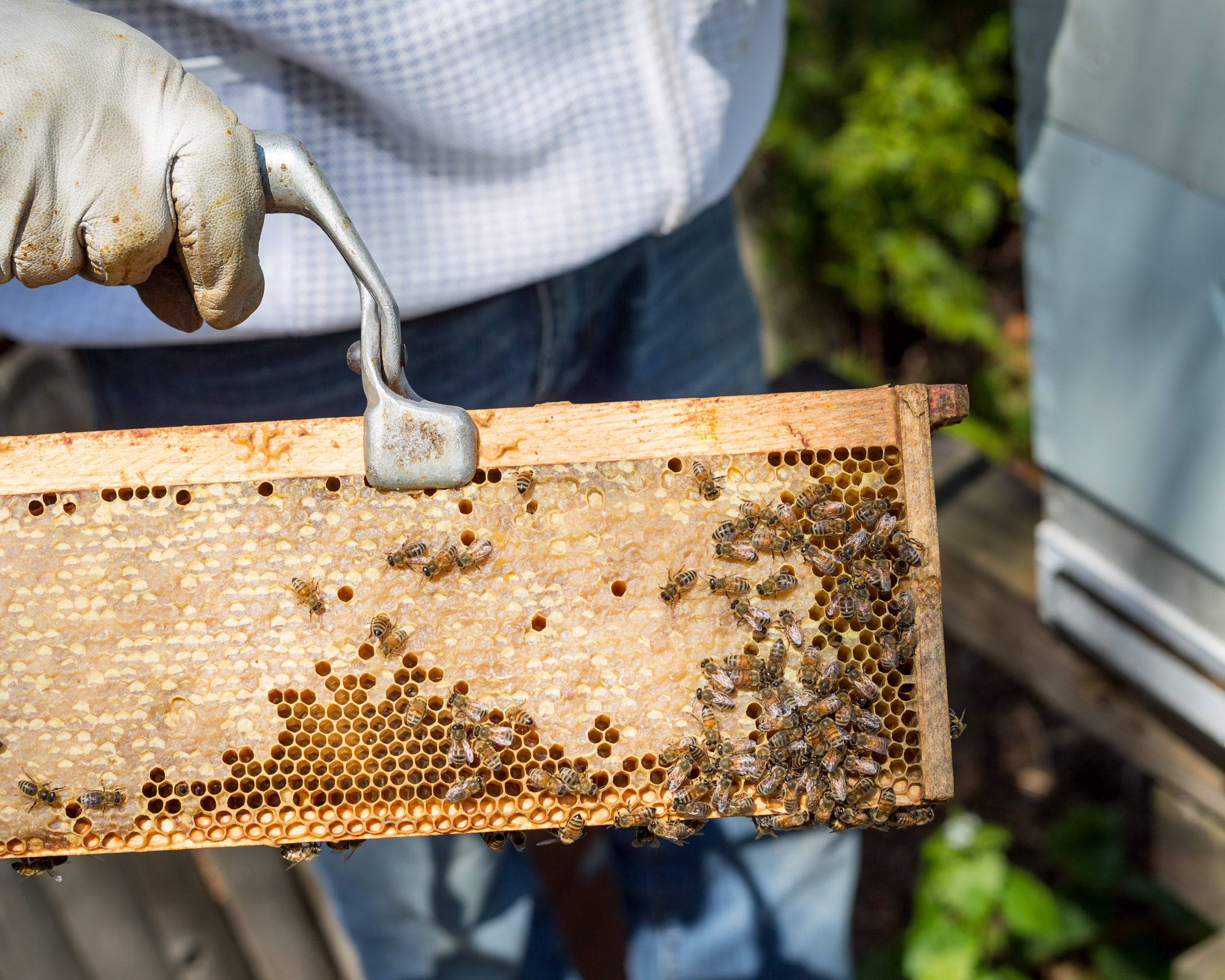 Beekeeper-1.jpg